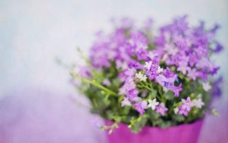 purple-flowers-2191623_640